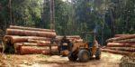 Deforestation in the Amazon has accelerated since Brazilian president Bolsonaro scrapped environmental laws. Shutterstock