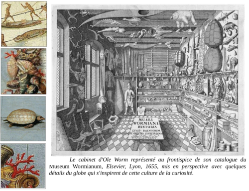 Le cabinet d'Ole Worm, comparé à des éléments du globe terrestre de Coronelli