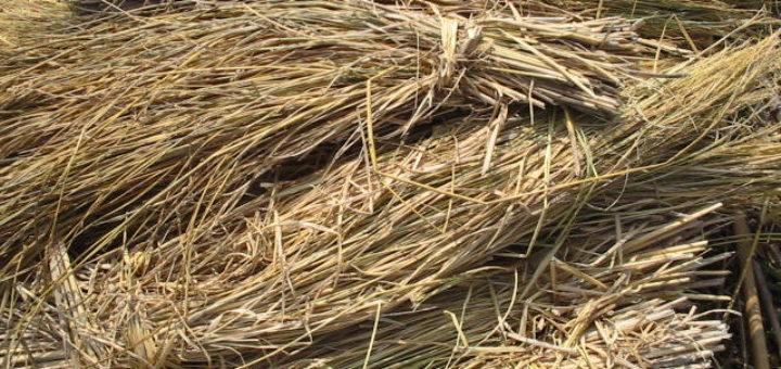 Rice straw