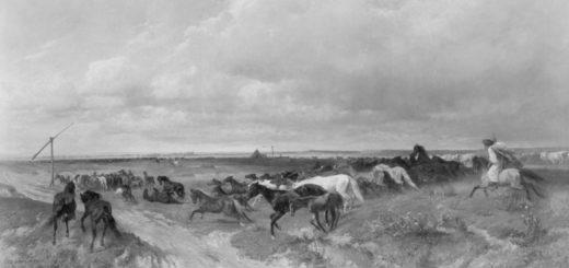 Chevaux en liberté | Von Thoren, Otto