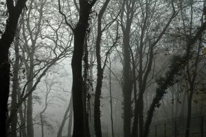Forêt de Petrín
