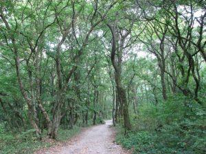 Forêt de Turda
