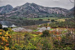 Paddy fields in Tamil Nadu