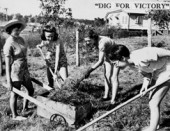Dig for Victory : Victory Gardens