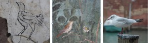 oiseaux - copie