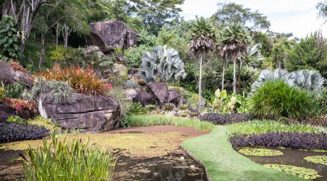 Roberto Burle Marx: La redécouverte de la biodiversité brésilienne par l'art des jardins.