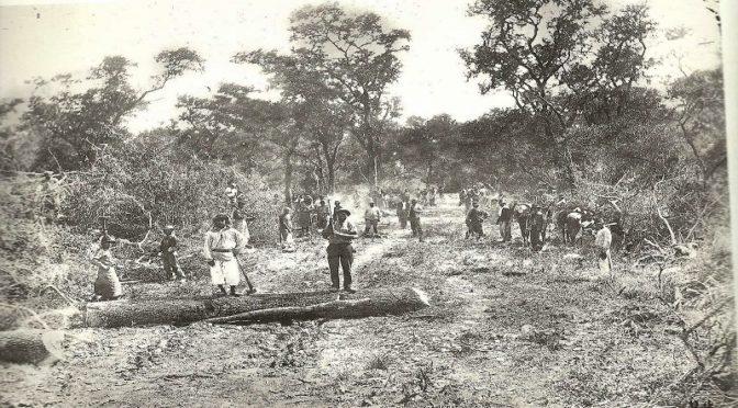 Regard anthropologique sur des destructions sociales et environnementales: un livre retrace l'histoire des exploitations forestières de la compagnie Forestal en Argentine.