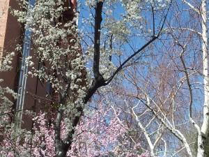 Primavera en la Uned. Campus de Humanidades (Paseo de Senda del Rey, Madrid)