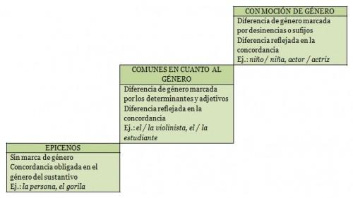 Diferencias de género en los sustantivos que reflejan diferencias de sexo. Imagen de E. Azofra para MorFlog