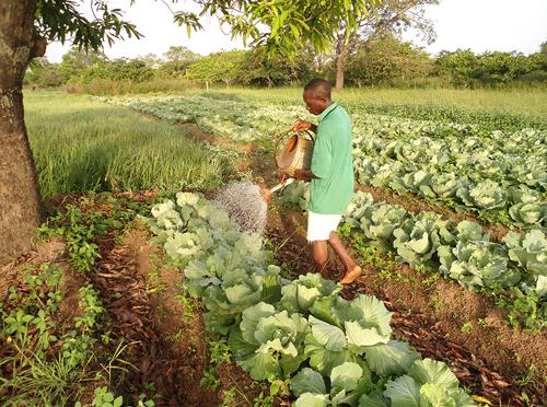 Construire la résilience au changement climatique par les connaissances locales : le cas des régions montagneuses et des savanes de Côte d'Ivoire