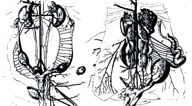 Un organicisme de la complexité. Notes pour un chapitre sur le socialisme et les sciences naturelles (France, première moitié du XIX e siècle)