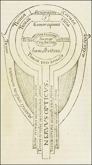 Représentation du modèle de l'œil imaginé par Alhazen