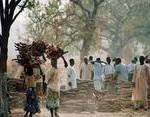 Déforestation et changement climatique : agir sur les causes