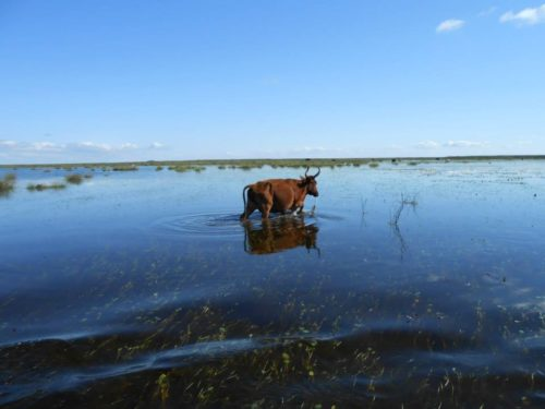 Chaque famille à ses bêtes qui sont laissées sur les hautes terres et ainsi paître en toute tranquilité