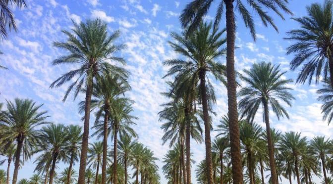 Compétition sur les ressources agricoles, disparition progressive de l'agriculture paysanne oasienne et conséquences sociales et environnementales. Le cas des oasis de la région du Nefzaoua dans le Sud-Ouest tunisien