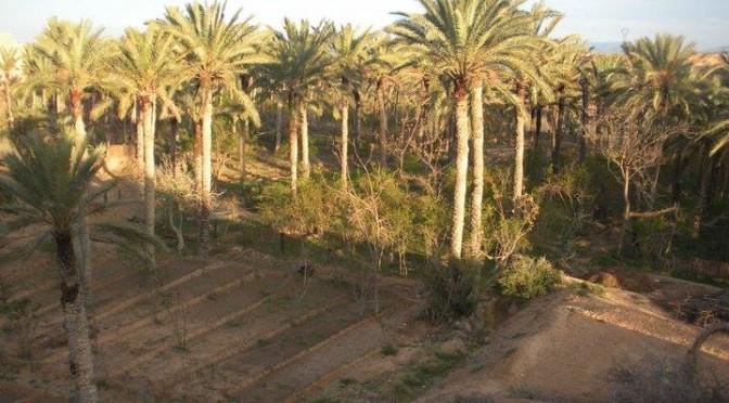 Les oasis de Tozeur et Chenini Gabès : diversité et durabilité des formes de valorisation à l'ère de la mondialisation et des crises du développement
