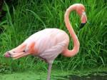 Un OGM est-il plus dangereux que le sourire du flamant rose ?