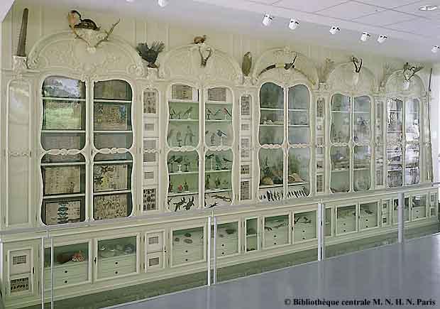 les grimaldi en leur cabinet de curiosit s mus um objet d 39 histoire. Black Bedroom Furniture Sets. Home Design Ideas
