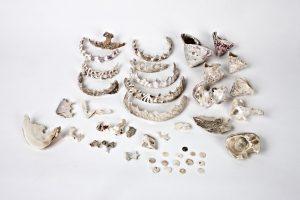 Fig. 36. Coquillages, nacre avec marque d'emporte-pièce, boutons. Cl. P. Giraud © Région des Pays de la Loire.