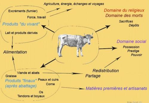 Fig 2 - Insertion des bovins dans les domaines cultuels.