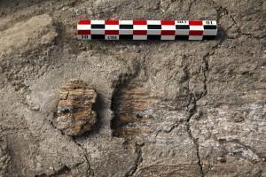 Fig. 4 : Détail des fibres végétales de l'aménagement du fond de la fosse. (photo © R. Khawam).