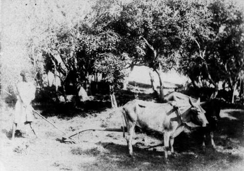 """Fig. 5 : """"Galla labourant"""", photographie d'un agriculteur oromo. © E.J.Bidault de Glatigné, 1889"""