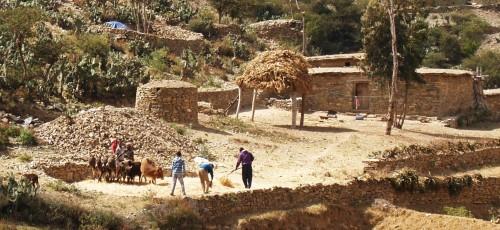 Fig. 9 : Battage du grain par des bœufs et des ânes dans la vallée de Ka Ebile. © N. Blond, 2014