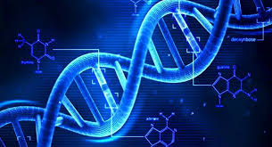 A la découverte de la génétique des textes