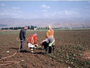 Ouvriers agricoles syriens dans la Bekaa, Cliché Karine Bennafla, 2005