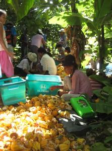 Vendedora de cacao en cascara - Krings 2013