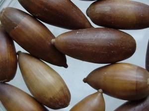 Quercus-ilex-semilla-e1271678515137