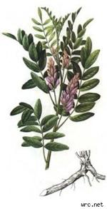 Licorice 1