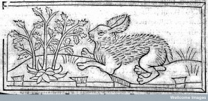 A hare, from the 15th century Dialogus creaturarum, by Nicolaus, Pergamenus