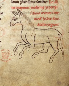 Detail of a marginal drawing of a horse. British Library, Harley 1585 f. 68v