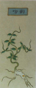 Figure 1. Illustration of gouwen (Gelsemium) in an early sixteenth-century materia medica text (Bencao pinhui jingyao, 1505). Image from Zhonghua dadian, ed. Zheng Jinsheng, 2008.