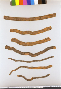 Figure 3. Gelsemium root preserved in the house of Shosoin in the Todaiji  Temple in Nara, dated to the eighth century. The roots are 0.5-2.0 cm in diameter and 17-24 cm in length. Image courtesy of the Imperial Household Agency website.