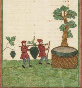 Folger MS V.b.232, folio 11 verso