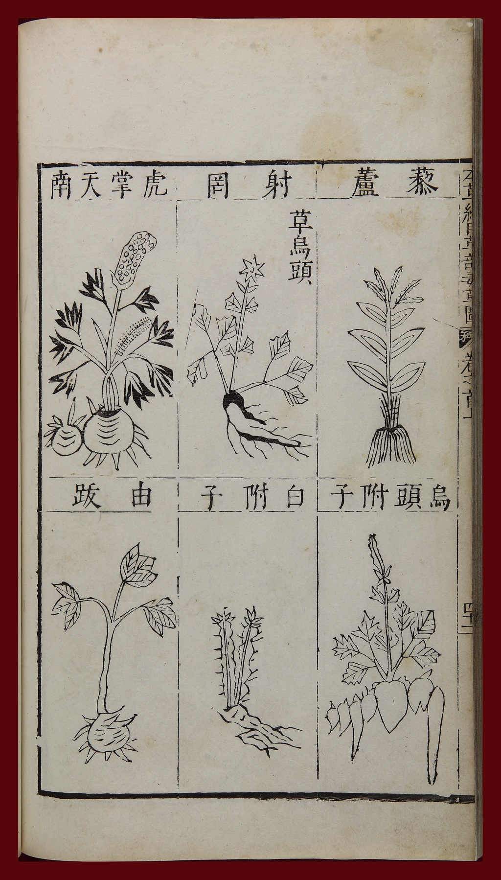 Images of toxic medicinal plants from China's most celebrated pharmacological work, Li Shizhen (1518-93), Compendium of Materia Medica (author's preface dated 1590). Woodblock edition of 1603. Wild aconite is the middle image in the top row. Cultivated aconite (main and subsidiary roots) are in the bottom right corner. Image credit: National Library of China. Posted on-line at the World Digital Library.
