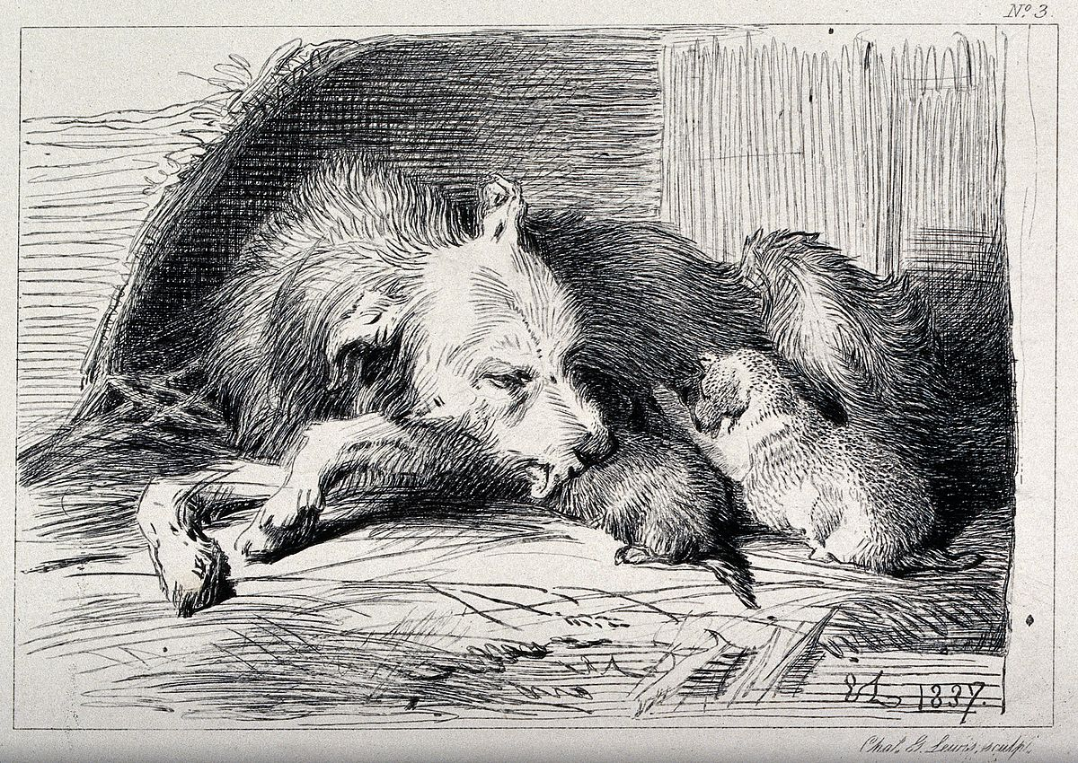 Etched image of a dog nursing three pups.