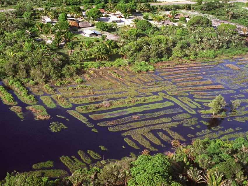 Agriculture précolombienne dans les Guyanes (1/3)